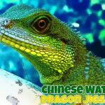 Chinese Water Dragon Jigsaw
